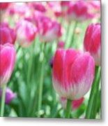 Tulips 2 Metal Print
