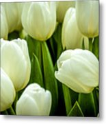 Tulips 4 Metal Print