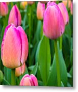 Tulips 5 Metal Print