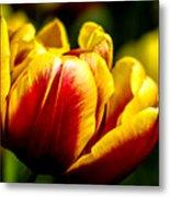 Tulips 7 Metal Print