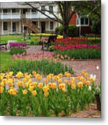 Tulips Abound Metal Print