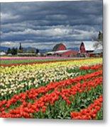 Tulips And Barn Metal Print