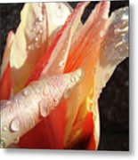 Tulips Artwork Flowers Floral Art Prints Spring Peach Tulip Flower Macro Metal Print