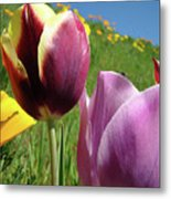 Tulips Artwork Tulip Flowers Spring Meadow Nature Art Prints Metal Print