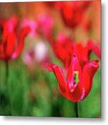Tulips At Honor Heights Metal Print