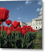 Tulips At The Capitol Metal Print