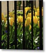 Tulips Behind Bars Metal Print