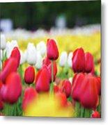 Tulips By Jared Windmuller - Tulip - Red -  Metal Print