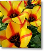 Tulips By The Artist Metal Print