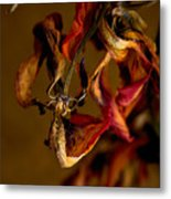 Tulip's Demise - A Natural Abstract Metal Print