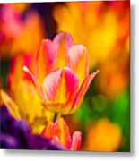Tulips Enchanting 15 Metal Print