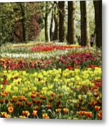 Tulips Everywhere 1 Metal Print