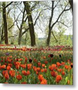 Tulips Everywhere 2 Metal Print