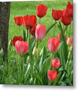 Tulips Flowers Art Prints Spring Tulip Flower Artwork Nature Art Metal Print