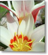 Tulips Flowers Artwork 1 Tulip Flower Art Prints Spring Floral Art White Tulips Garden Metal Print