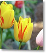 Tulips Garden Art Prints Yellow Red Tulip Flowers Baslee Troutman Metal Print