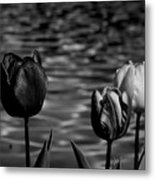 Tulips In Black And White Metal Print