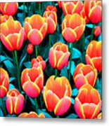 Tulips In Holland Metal Print
