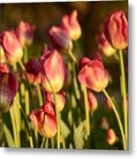 Tulips In Public Garden Metal Print