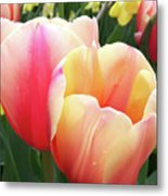 Tulips In Soft Pastels Metal Print
