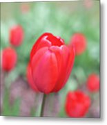 Tulips In Spring 4 Metal Print