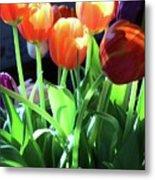 Tulips In The Light Metal Print