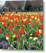 Tulips In The Park. Metal Print