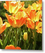 Tulips In The Sunlight Metal Print