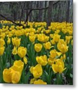 Tulips In The Woods Metal Print