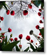 Tulips In Wonderland H083 Metal Print
