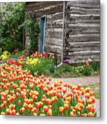Tulips Lead To The Cabin Metal Print