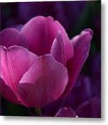 Tulips Purple Layers Metal Print