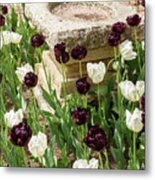 Tulips Surround The Bird Bath Metal Print
