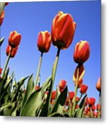 Tulips Time 3 Metal Print