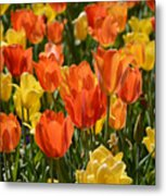 Tulips Yellow And Tangerine Metal Print