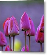 Tullips  Metal Print