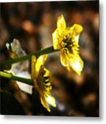 Tundra Rose Metal Print