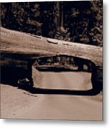 Tunnel Log - Sequoia National Park Metal Print