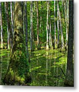 Tupelo Trees In Mississippi  Metal Print