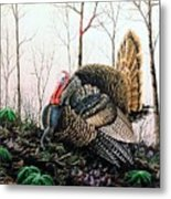 In Strut - Turkey Metal Print