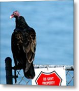 Turkey Buzzard Metal Print