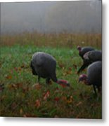 Turkey On A Foggy Morning Metal Print
