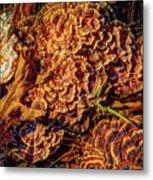 Turkey Tail Mushrooms  Metal Print