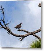 Turkey Vulture On Dead Tree Metal Print