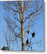 Turkey Vulture Tree Metal Print