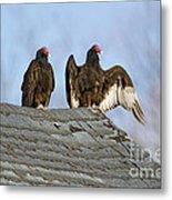 Turkey Vultures On Roof Metal Print