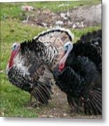 Turkeys In The Yard At Laguna Guerrero Metal Print