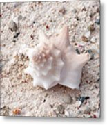 Turks And Caicos Shell Metal Print