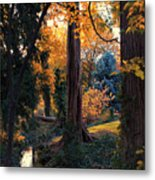 Turning Of The Leaves Metal Print