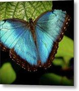 Turquoise Beauty Metal Print